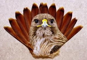 @RT Hawk Tail